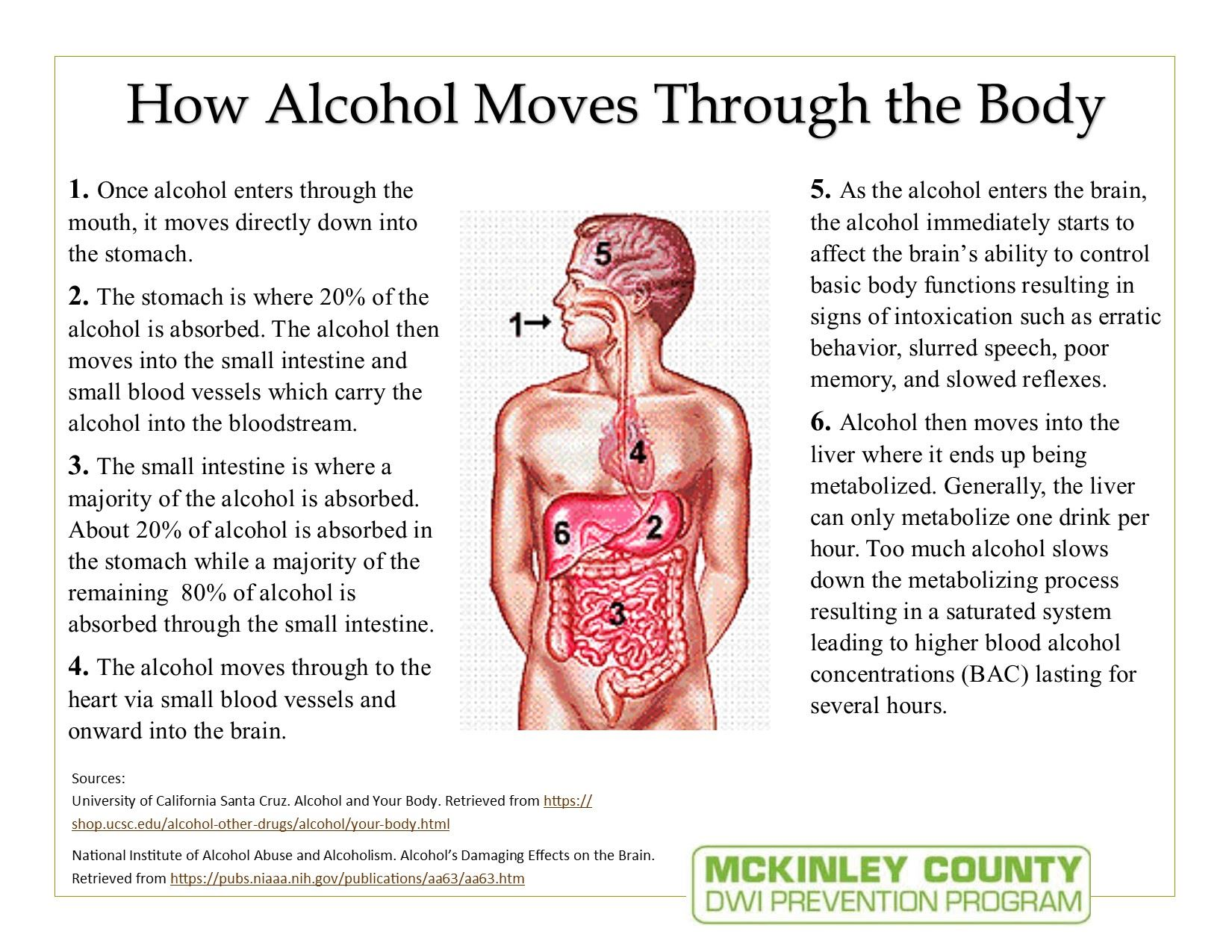 How Alcohol Moves Through The Body